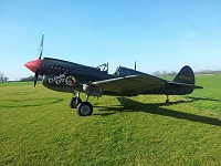 The P-40 'Little Kitty' in pristine February sunlight